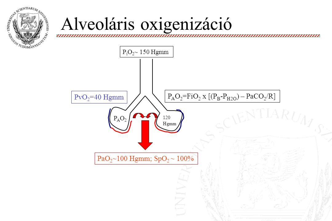Alveoláris oxigenizáció Molnár '99 PvO 2 =40 Hgmm PAO2PAO2 PaO 2 ~100 Hgmm; SpO 2 ~ 100% 120 Hgmm P A O 2 =FiO 2 x [(P B -P H2O ) – PaCO 2 /R] P i O 2