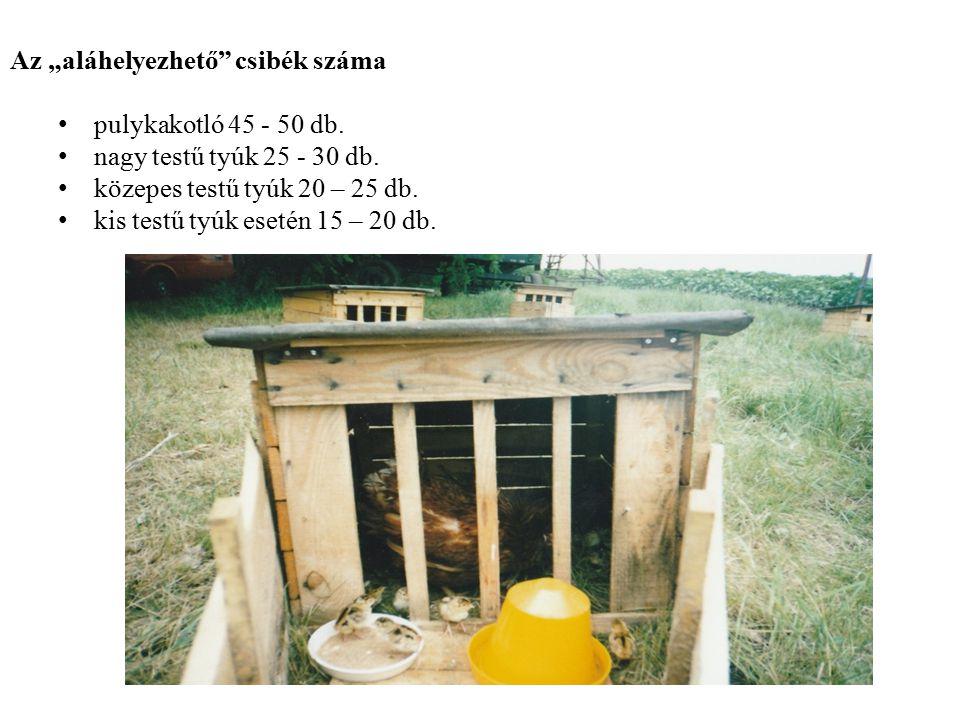 """Az """"aláhelyezhető"""" csibék száma pulykakotló 45 - 50 db. nagy testű tyúk 25 - 30 db. közepes testű tyúk 20 – 25 db. kis testű tyúk esetén 15 – 20 db."""