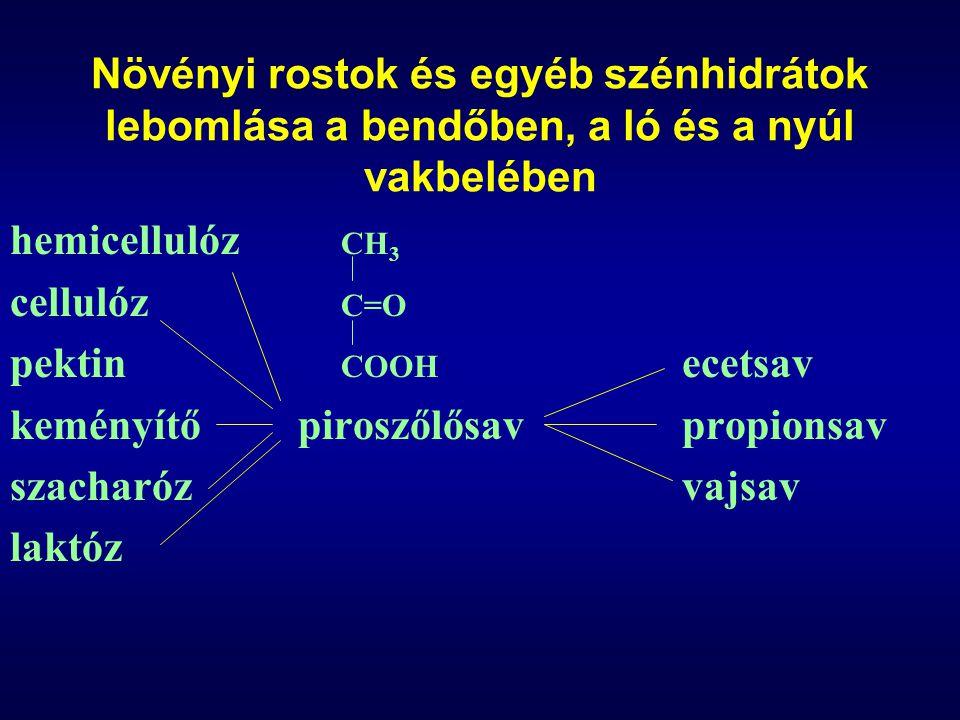 Növényi rostok és egyéb szénhidrátok lebomlása a bendőben, a ló és a nyúl vakbelében hemicellulóz CH 3 cellulóz C=O pektin COOH ecetsav keményítőpiros