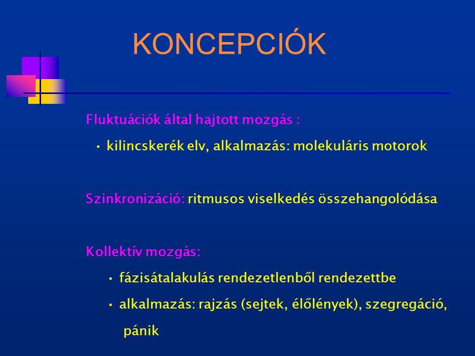 KONCEPCIÓK Fluktuációk által hajtott mozgás : kilincskerék elv, alkalmazás: molekuláris motorok Szinkronizáció: ritmusos viselkedés összehangolódása Kollektív mozgás: fázisátalakulás rendezetlenből rendezettbe alkalmazás: rajzás (sejtek, élőlények), szegregáció, pánik