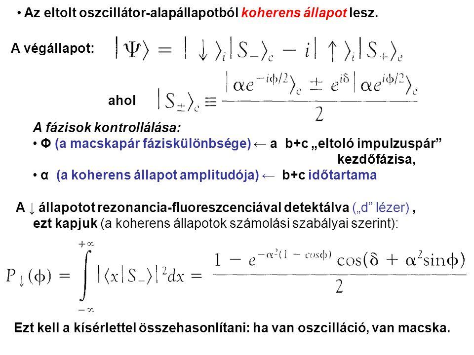 """A végállapot: A fázisok kontrollálása: Φ (a macskapár fáziskülönbsége) ← a b+c """"eltoló impulzuspár kezdőfázisa, α (a koherens állapot amplitudója) ← b+c időtartama ahol A ↓ állapotot rezonancia-fluoreszcenciával detektálva (""""d lézer), ezt kapjuk (a koherens állapotok számolási szabályai szerint): Ezt kell a kísérlettel összehasonlítani: ha van oszcilláció, van macska."""