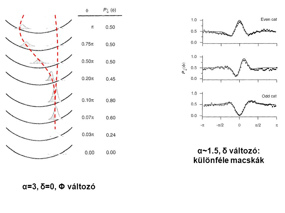 A fő paraméter α (a koherens állapot kitérése): az oszcillátor átlagos gerjesztési szintje a koherens állapotban A dekoherencia sebessége is -tel arányosan nő: túlnagy macskák nem érik meg a detektálás pillanatát.