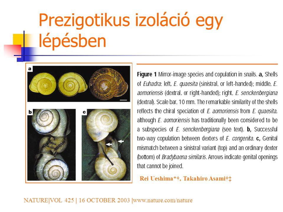Prezigotikus izoláció egy lépésben NATURE | VOL 425 | 16 OCTOBER 2003 | www.nature.com/nature Rei Ueshima*†, Takahiro Asami†‡