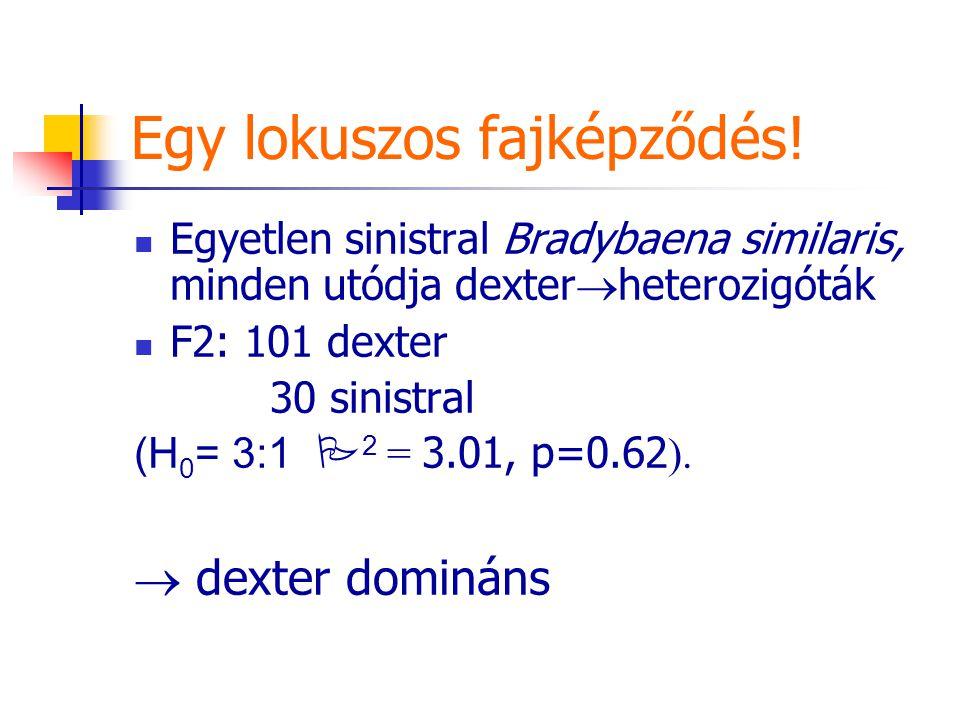 Egy lokuszos fajképződés! Egyetlen sinistral Bradybaena similaris, minden utódja dexter  heterozigóták F2: 101 dexter 30 sinistral (H 0 = 3:1  2 = 3