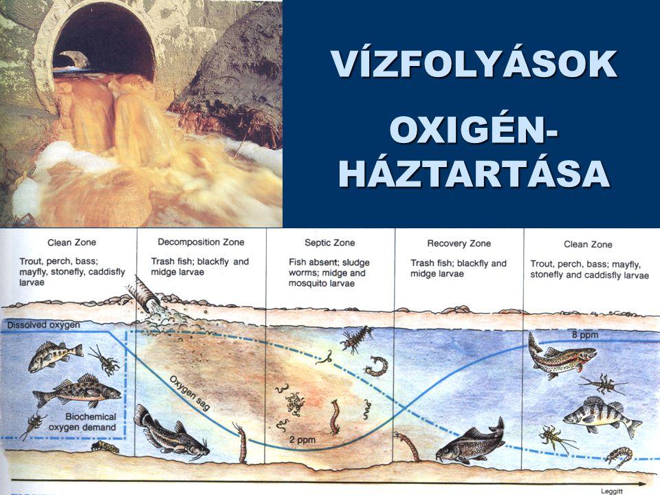 VÍZFOLYÁSOK OXIGÉN- HÁZTARTÁSA