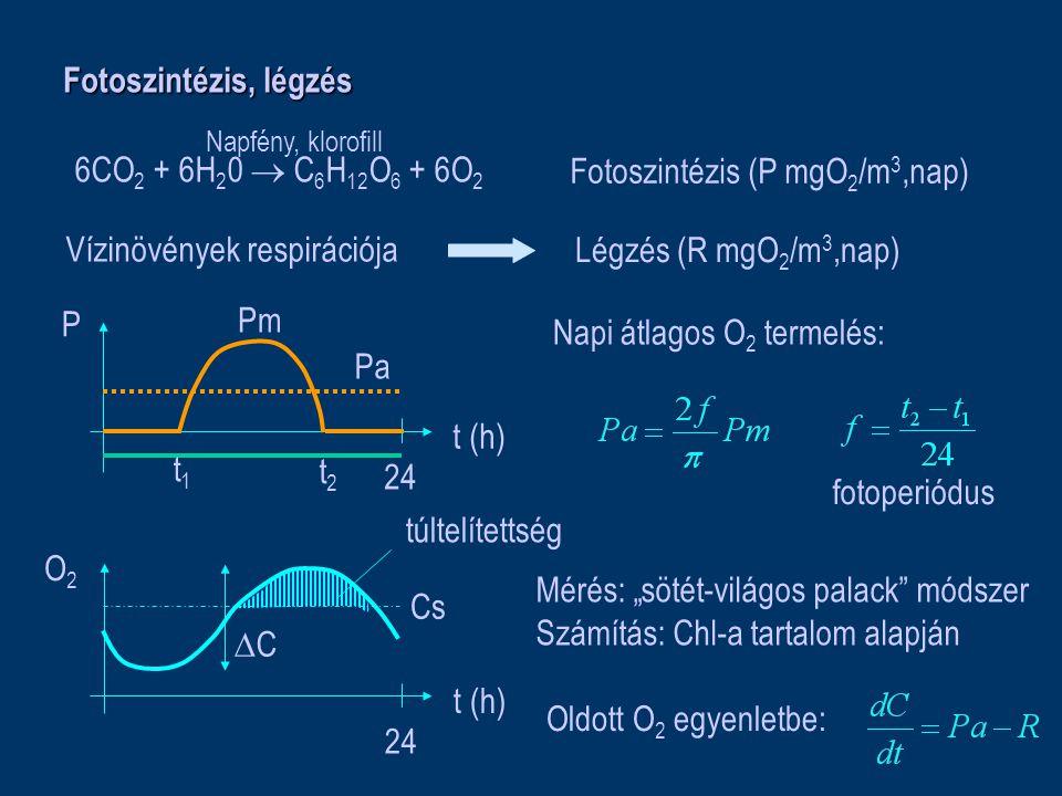 Fotoszintézis, légzés 6CO 2 + 6H 2 0  C 6 H 12 O 6 + 6O 2 Napfény, klorofill Fotoszintézis (P mgO 2 /m 3,nap) Légzés (R mgO 2 /m 3,nap) t (h) P 24 t