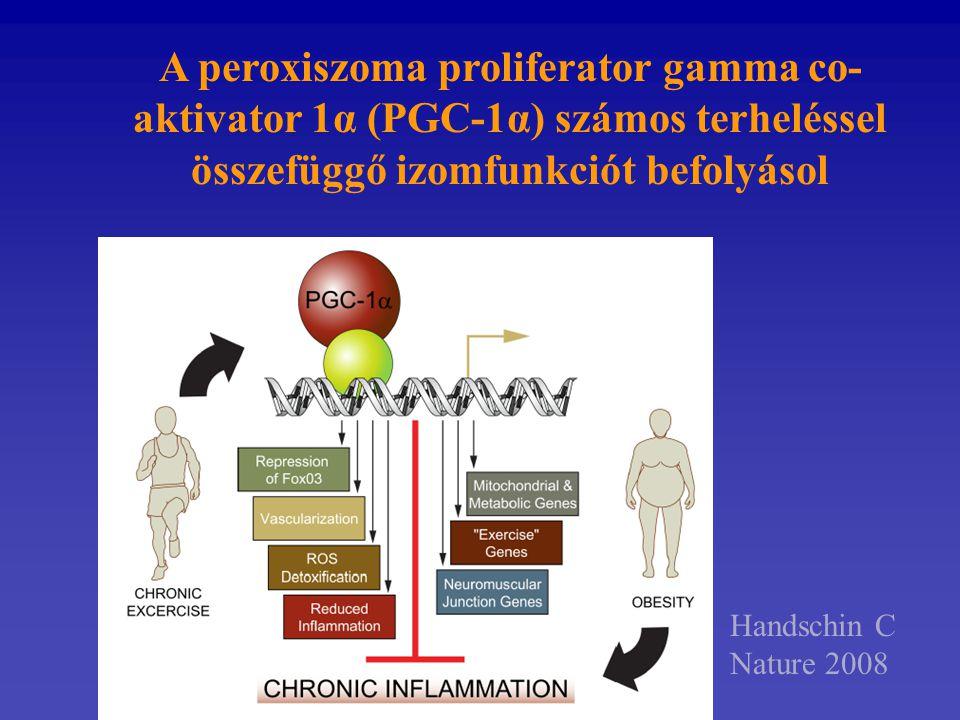 A peroxiszoma proliferator gamma co- aktivator 1α (PGC-1α) számos terheléssel összefüggő izomfunkciót befolyásol Handschin C Nature 2008