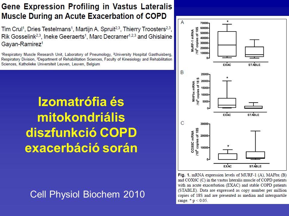 Cell Physiol Biochem 2010 Izomatrófia és mitokondriális diszfunkció COPD exacerbáció során
