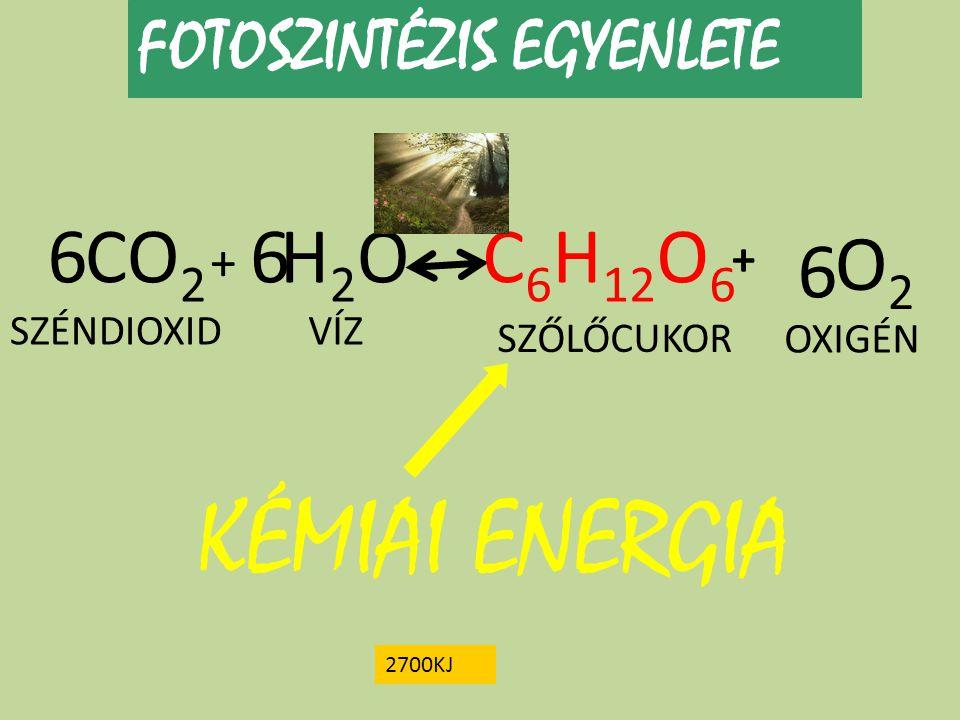 FOTOSZINTÉZIS EGYENLETE CO 2 + H2OH2OC 6 H 12 O 6 O2O2 + 66 KÉMIAI ENERGIA 2700KJ 6 SZÉNDIOXIDVÍZ SZŐLŐCUKOR OXIGÉN