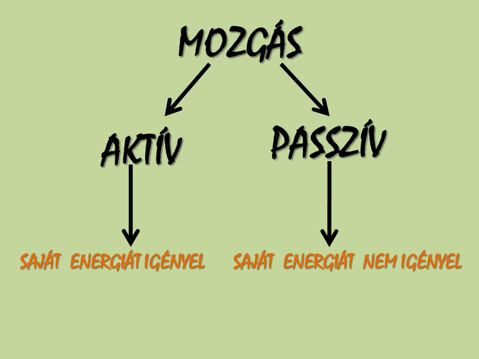 MOZGÁS AKTÍV PASSZÍV SAJÁT ENERGIÁT IGÉNYEL SAJÁT ENERGIÁT NEM IGÉNYEL