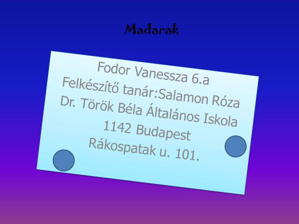Madarak Fodor Vanessza 6.a Felkészítő tanár:Salamon Róza Dr. Török Béla Általános Iskola 1142 Budapest Rákospatak u. 101. Fodor Vanessza 6.a Felkészít