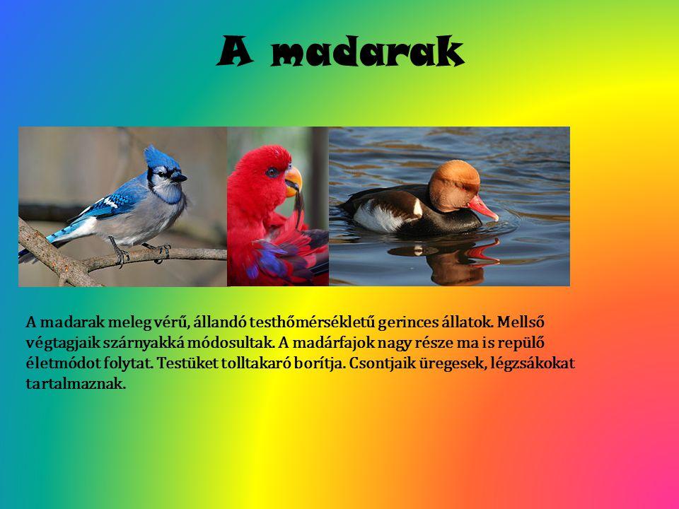 A madarak A madarak meleg vérű, állandó testhőmérsékletű gerinces állatok. Mellső végtagjaik szárnyakká módosultak. A madárfajok nagy része ma is repü