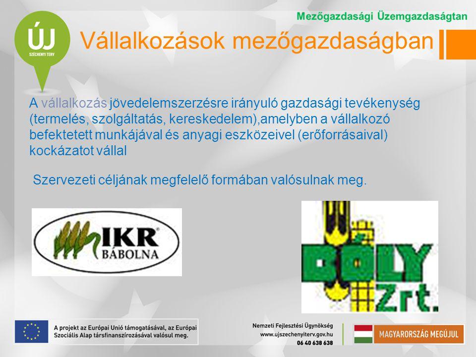 Üzem – vállalat - gazdaság A vállalkozások termelési és üzleti tevékenysége szervezeti egységeire az üzem és a vállalat elnevezést használjuk.