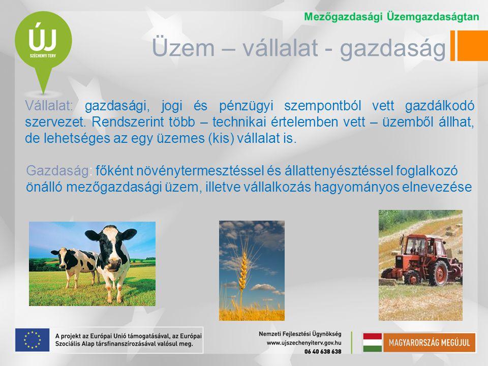 Üzem – vállalat - gazdaság A magyar vállalati struktúra igen változatos képet mutat.