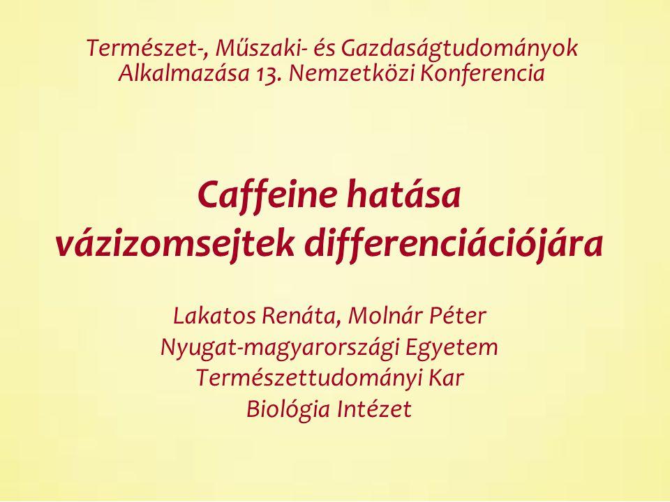 Caffeine hatása vázizomsejtek differenciációjára Lakatos Renáta, Molnár Péter Nyugat-magyarországi Egyetem Természettudományi Kar Biológia Intézet Természet-, Műszaki- és Gazdaságtudományok Alkalmazása 13.