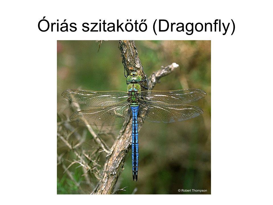 Óriás szitakötő (Dragonfly)
