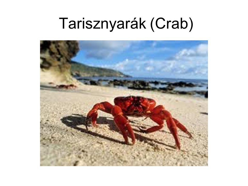 Tarisznyarák (Crab)