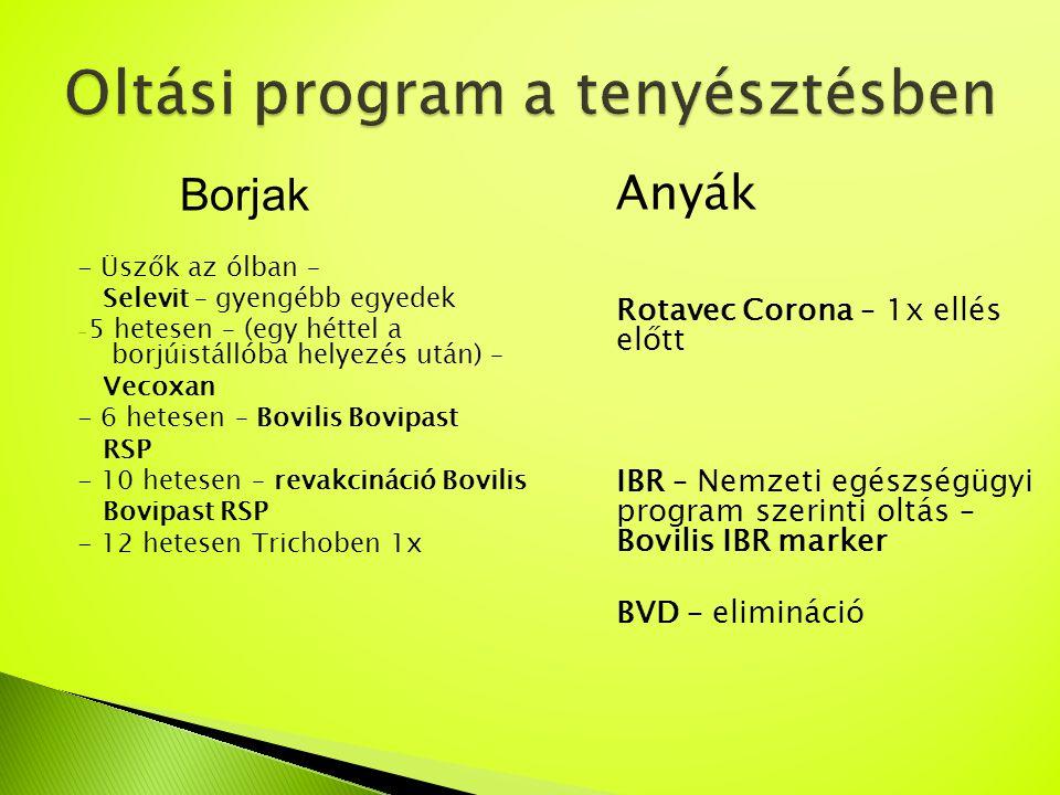 Borjak - Üszők az ólban – Selevit – gyengébb egyedek - 5 hetesen – (egy héttel a borjúistállóba helyezés után) – Vecoxan - 6 hetesen – Bovilis Bovipas