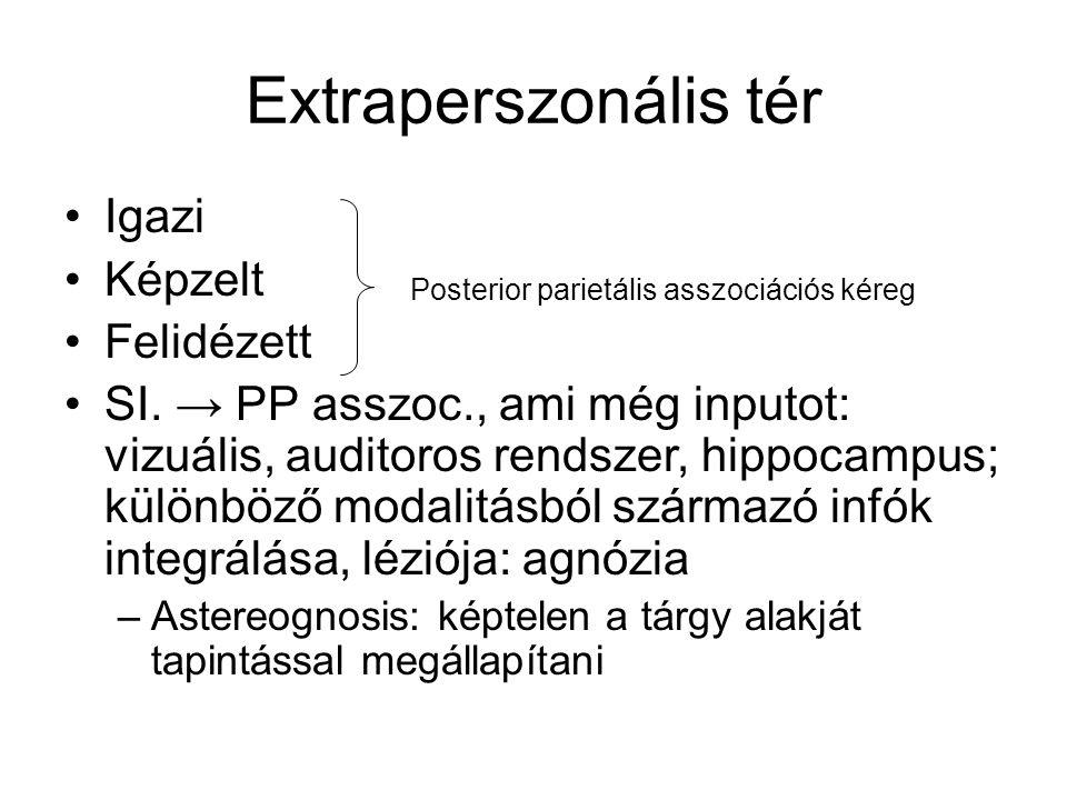 Extraperszonális tér Igazi Képzelt Felidézett SI. → PP asszoc., ami még inputot: vizuális, auditoros rendszer, hippocampus; különböző modalitásból szá