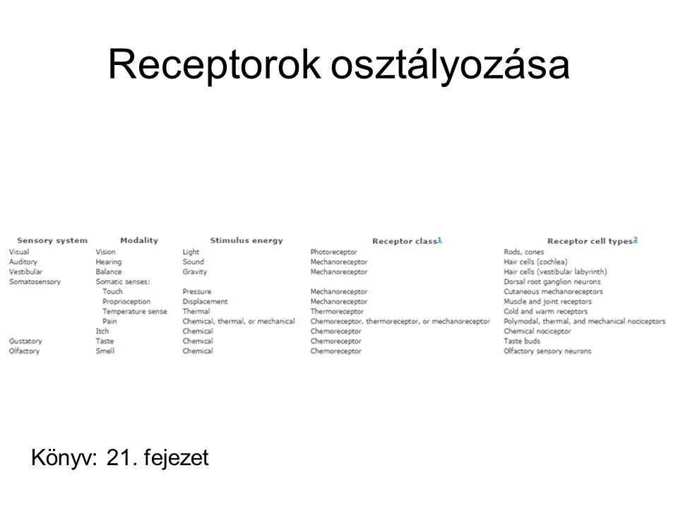 Receptorok osztályozása Könyv: 21. fejezet