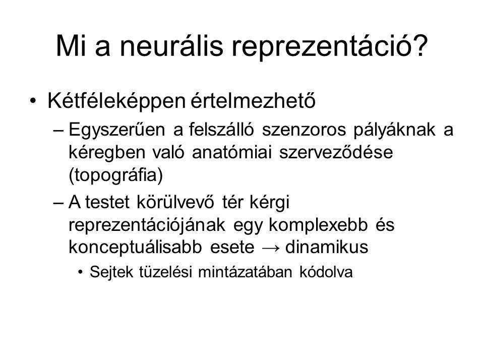 Mi a neurális reprezentáció? Kétféleképpen értelmezhető –Egyszerűen a felszálló szenzoros pályáknak a kéregben való anatómiai szerveződése (topográfia