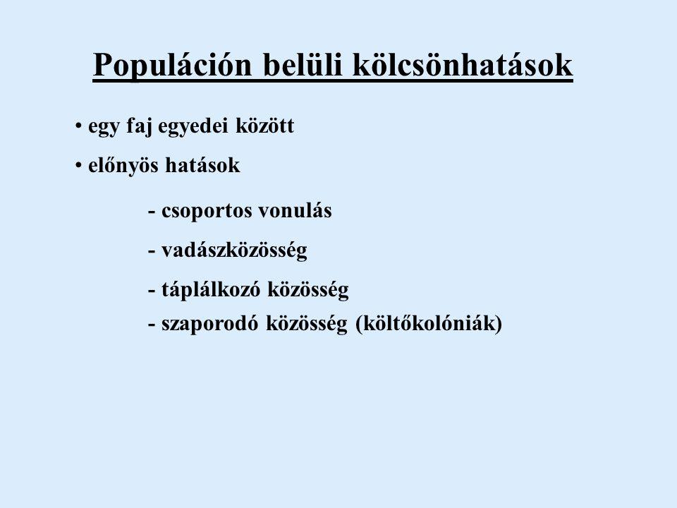 Populáción belüli kölcsönhatások egy faj egyedei között előnyös hatások - csoportos vonulás - vadászközösség - táplálkozó közösség - szaporodó közösség (költőkolóniák)
