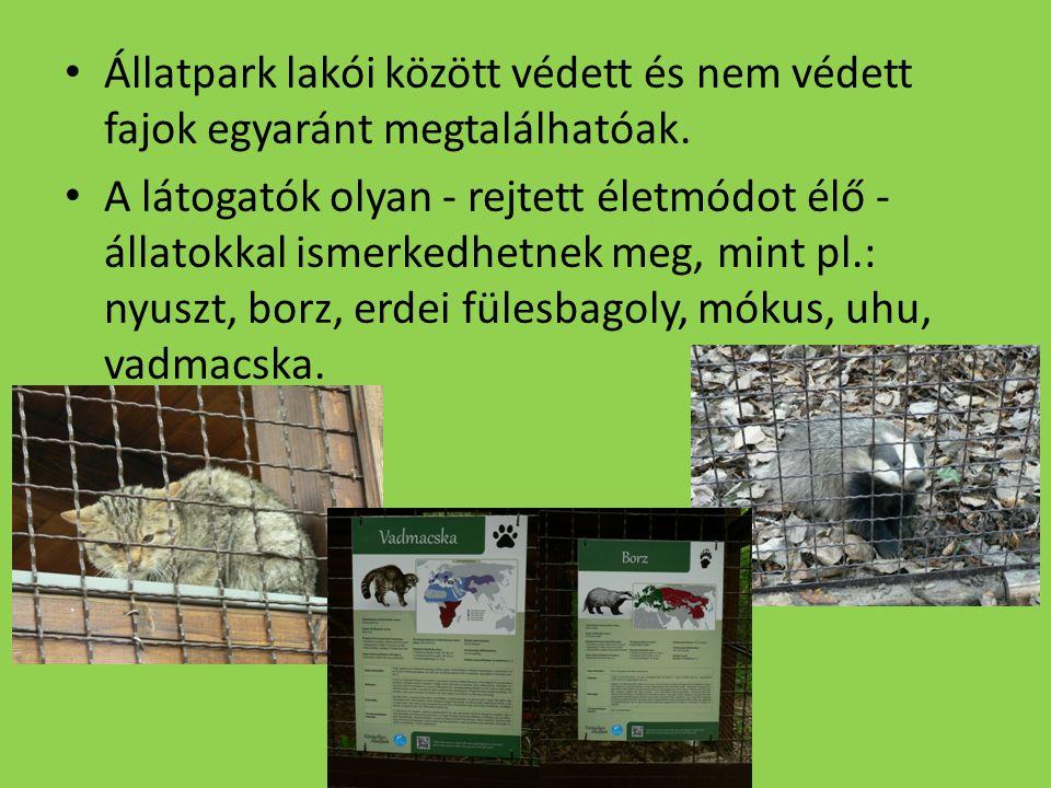 Állatpark lakói között védett és nem védett fajok egyaránt megtalálhatóak. A látogatók olyan - rejtett életmódot élő - állatokkal ismerkedhetnek meg,