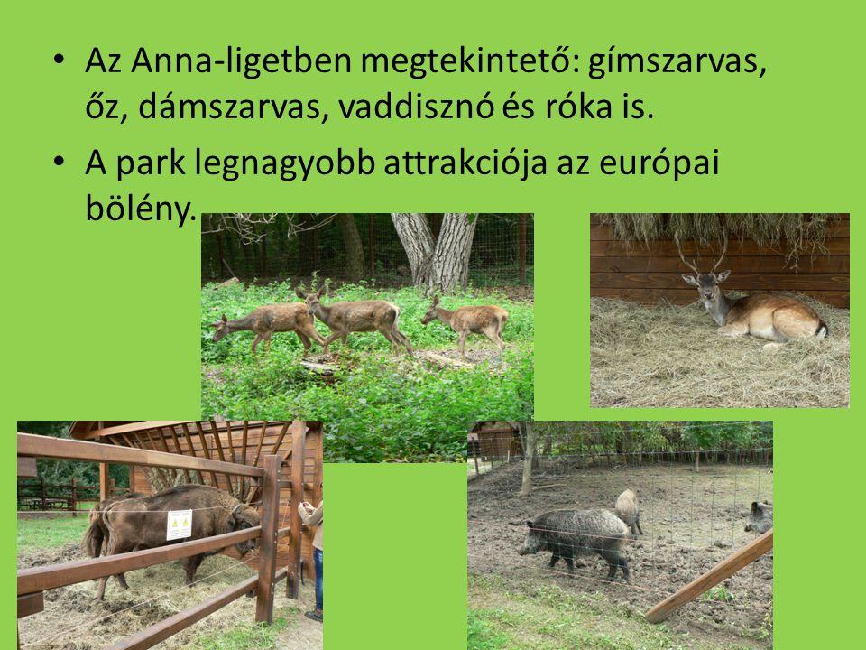 Az Anna-ligetben megtekintető: gímszarvas, őz, dámszarvas, vaddisznó és róka is. A park legnagyobb attrakciója az európai bölény.