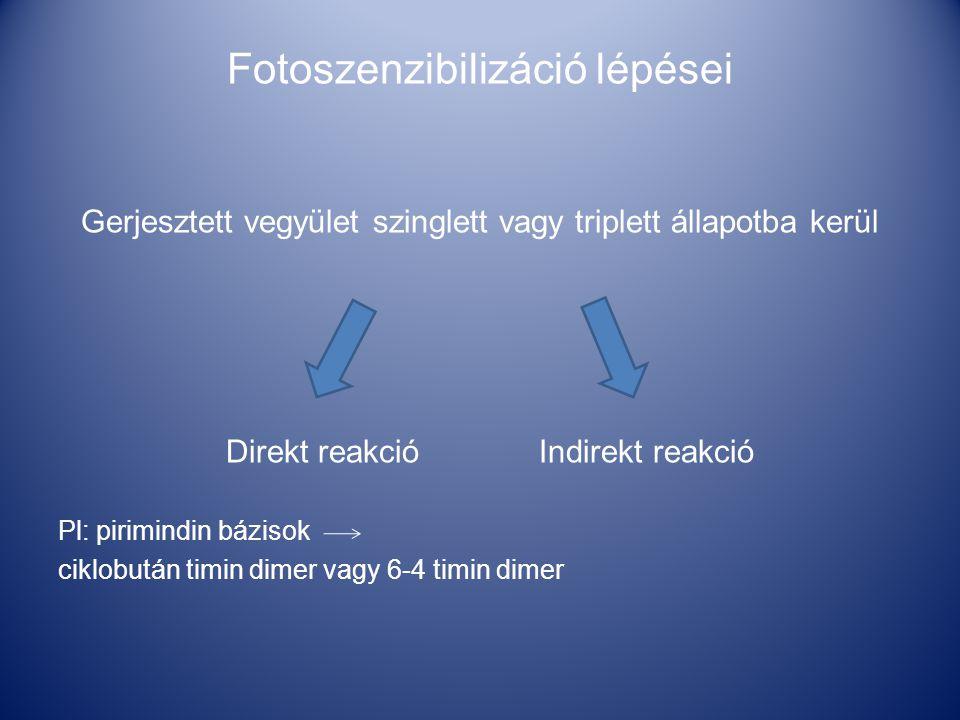 Fotoszenzibilizáció lépései Gerjesztett vegyület szinglett vagy triplett állapotba kerül Direkt reakció Indirekt reakció Pl: pirimindin bázisok ciklobután timin dimer vagy 6-4 timin dimer