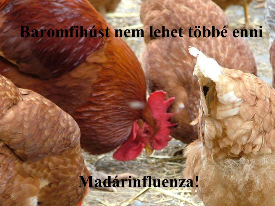 Baromfihúst nem lehet többé enni Madárinfluenza!