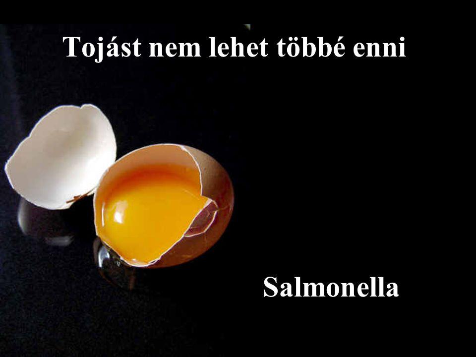 Salmonella Tojást nem lehet többé enni
