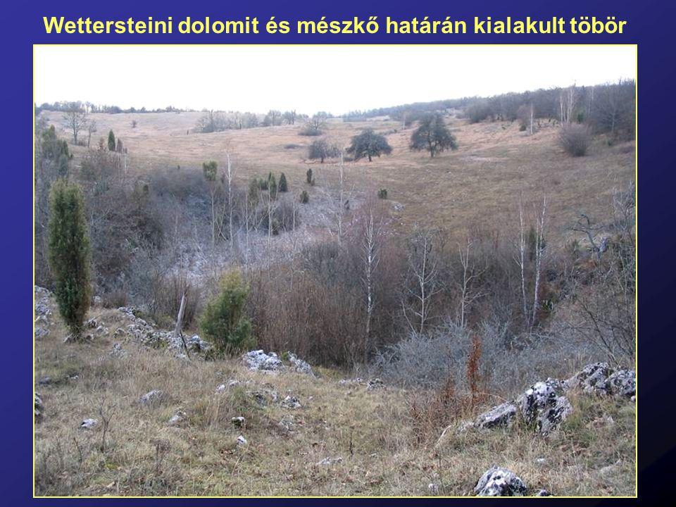 Wettersteini dolomit és mészkő határán kialakult töbör