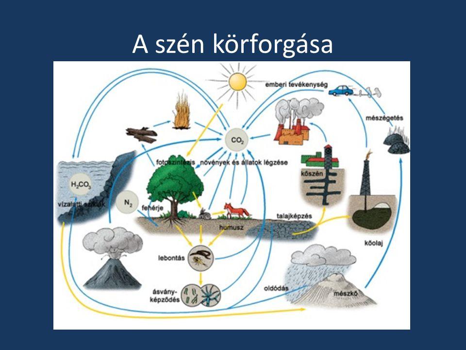A szén körforgása