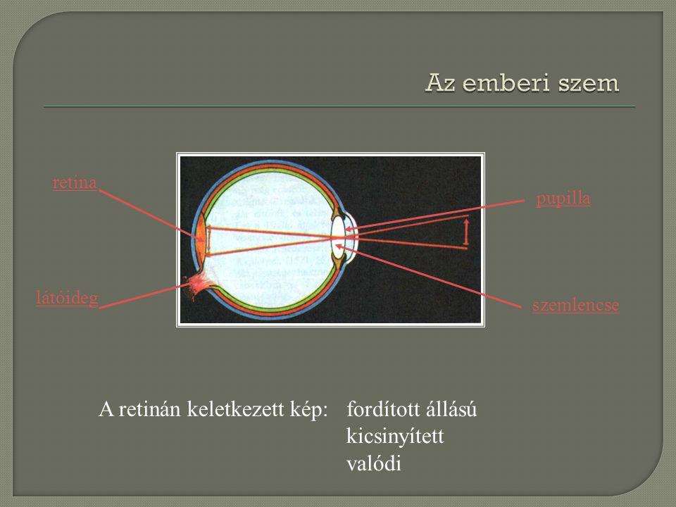 retina látóideg pupilla szemlencse A retinán keletkezett kép: fordított állású kicsinyített valódi