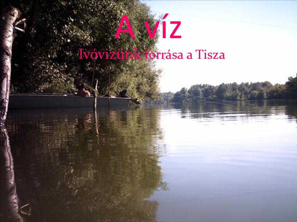 A víz Ivóvizünk forrása a Tisza