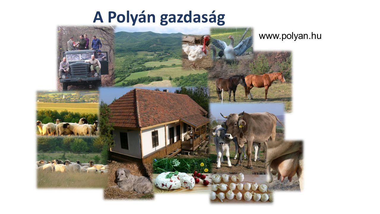 Szabolcsi Szociális Szövetkezet www.szabolcsiszovetkeze t.hu