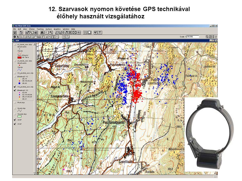 12. Szarvasok nyomon követése GPS technikával élőhely használt vizsgálatához