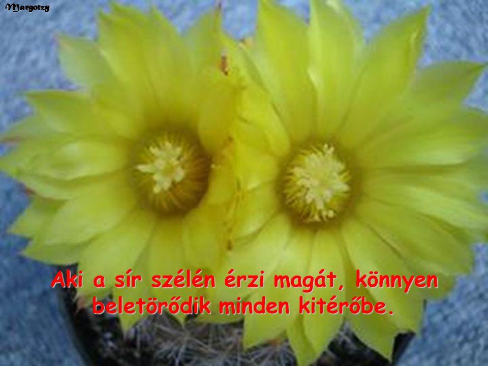 Margotzy Kaktuszok és Victor Hugo