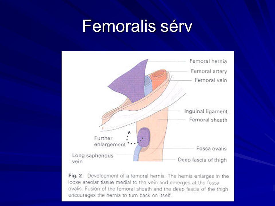 Femoralis sérv