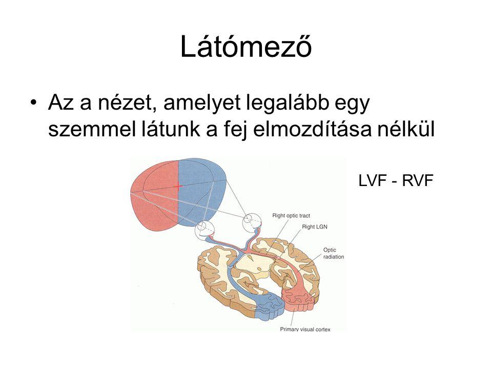 Látómező Az a nézet, amelyet legalább egy szemmel látunk a fej elmozdítása nélkül LVF - RVF