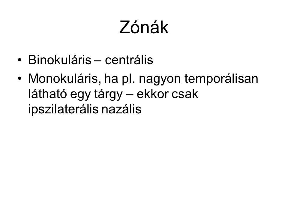 Zónák Binokuláris – centrális Monokuláris, ha pl. nagyon temporálisan látható egy tárgy – ekkor csak ipszilaterális nazális
