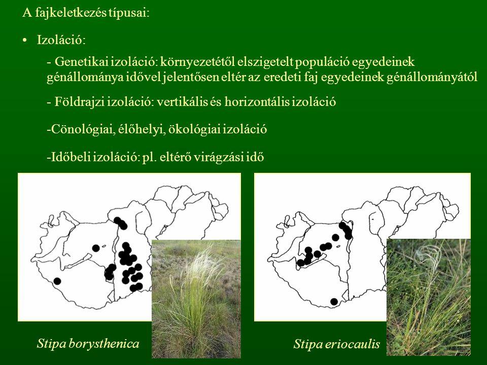 A fajkeletkezés típusai: Izoláció: - Genetikai izoláció: környezetétől elszigetelt populáció egyedeinek génállománya idővel jelentősen eltér az eredet