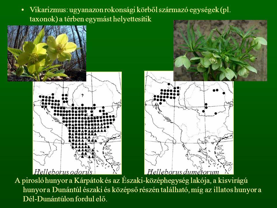 Vikarizmus: ugyanazon rokonsági körből származó egységek (pl. taxonok) a térben egymást helyettesítik Helleborus odorusHelleborus dumetorum A pirosló