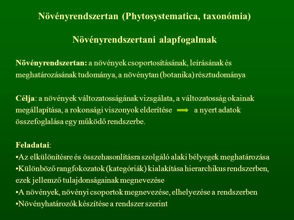 Növényrendszertan (Phytosystematica, taxonómia) Növényrendszertani alapfogalmak Növényrendszertan: a növények csoportosításának, leírásának és meghatá