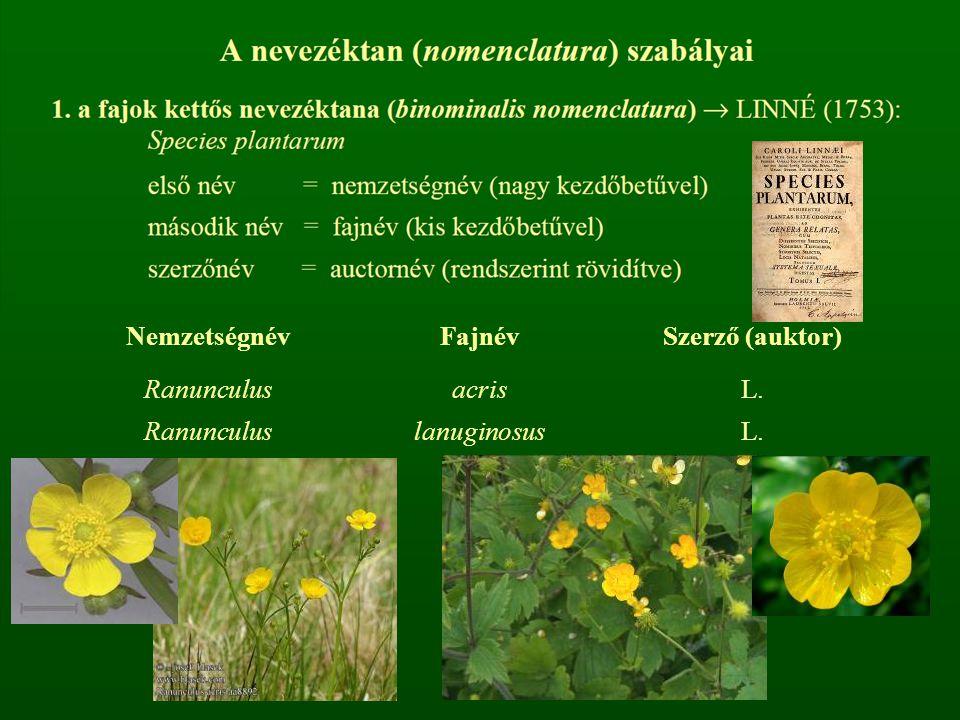 NemzetségnévFajnévSzerző (auktor) Ranunculus acris lanuginosus L.
