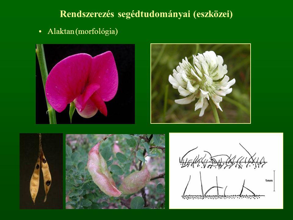 Rendszerezés segédtudományai (eszközei) Alaktan (morfológia)