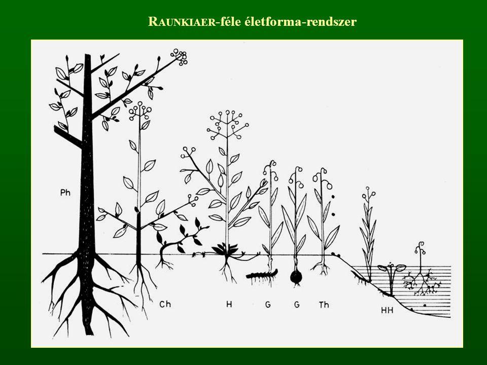 R AUNKIAER -féle életforma-rendszer