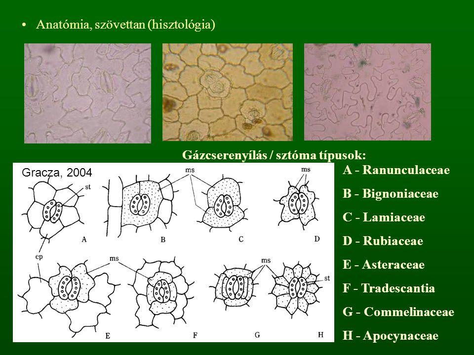 Gázcserenyílás / sztóma típusok: A - Ranunculaceae B - Bignoniaceae C - Lamiaceae D - Rubiaceae E - Asteraceae F - Tradescantia G - Commelinaceae H -