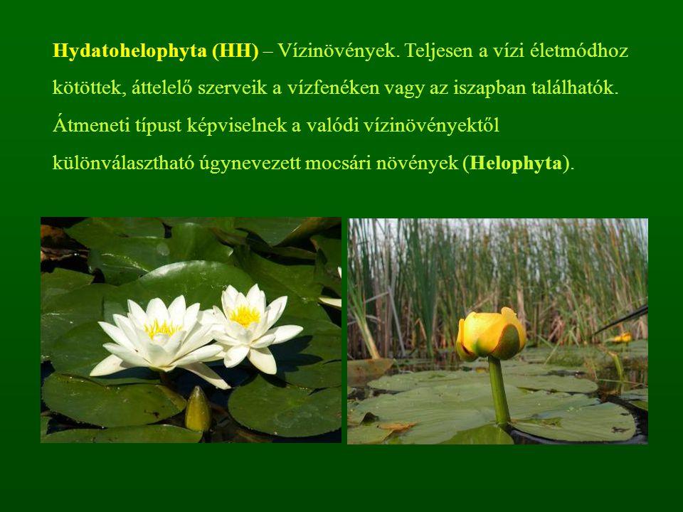 Hydatohelophyta (HH) – Vízinövények. Teljesen a vízi életmódhoz kötöttek, áttelelő szerveik a vízfenéken vagy az iszapban találhatók. Átmeneti típust