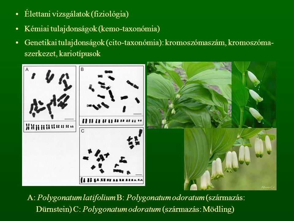 Élettani vizsgálatok (fiziológia) Kémiai tulajdonságok (kemo-taxonómia) Genetikai tulajdonságok (cito-taxonómia): kromoszómaszám, kromoszóma- szerkeze